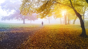 Person walking in a park Royalty Free Stock Image