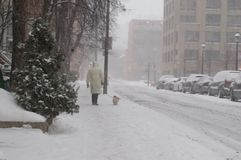 Person walking a small dog on a leash on a city street on a snowy day. A snowy and cold day in the city. A person is walking a small dog on the snow covered Stock Photos