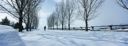 Person Walking In Snow Stock Images
