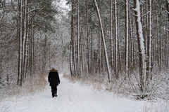 Person walking in a snowy forest Stock Photos
