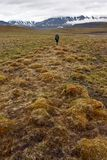 Person walking in tundra on Svalbard Stock Photos