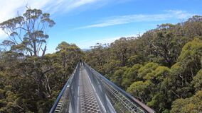 Person walking on valley of the giants tree top walk 02