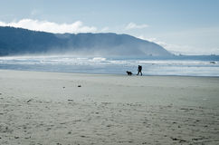 Person walks his dog on California beach Stock Image