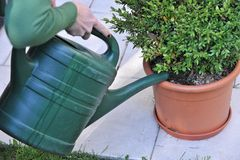 Person watering plant in pot Royalty Free Stock Image