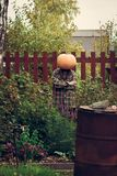 Person wear pumpkin on head posing with hand crossed. Person wear pumpkin on head. Standing in the middle of the garden with hands crossed on chest. Scarry stock photography