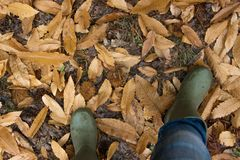 A person wearing a pair of traditional green rubber wellington boots in a forest. Rainy autumn with leaves on the ground. personal point of view Stock Photos