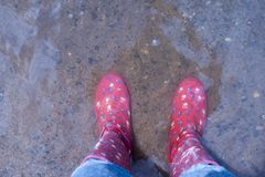 Person Wearing Pink Knee-high Rain Boots Standing on Brown Floor royalty free stock image