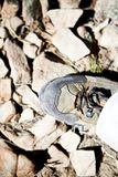 Person wearing rusting hiking boots Stock Images