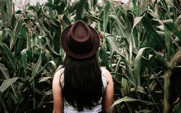 Person in White Top Surrounded by Corn during Daytime Stock Photos
