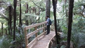 Person on Wooden Bridge Surrounded By Trees Royalty Free Stock Photography