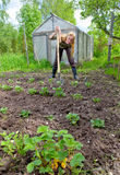 The person works at a bed in a kitchen garden Royalty Free Stock Images