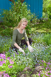 The person works in a garden for a bed with cultivated flowers Stock Image