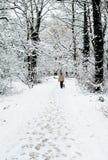 Persona che cammina attraverso il legno nevoso Immagini Stock Libere da Diritti