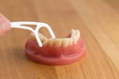 Persona che flossing un insieme dei denti falsi Fotografia Stock Libera da Diritti
