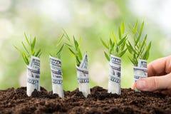 Persona che pianta le piante di soldi Fotografia Stock
