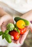 Persona che tiene le verdure coltivate sul posto di recente selezionate Immagine Stock