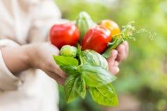 Persona che tiene le verdure coltivate sul posto di recente selezionate Fotografia Stock
