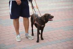 Persona cieca con il cane guida immagini stock