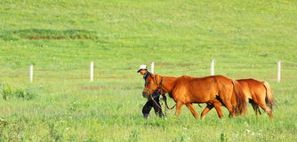 Persona con el caballo dos Fotografía de archivo