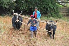 Persona dura non identificata del lavoro degli agricoltori il campo Fotografie Stock
