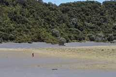 Persona Playa que camina Hermosa Foto de archivo libre de regalías