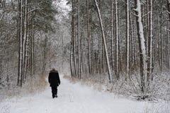 Persona que camina en un bosque nevoso Fotos de archivo