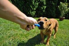 Persona que juega con un perro Fotografía de archivo
