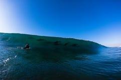 Persona que practica surf de los delfínes de la onda de océano