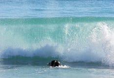 Persona que practica surf ducking debajo de onda de fractura grande Imagen de archivo