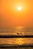Persona que practica surf que se bate con una puesta del sol hermosa en Huanchaco, Perú Fotografía de archivo