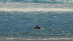 Persona que practica surf que se bate hacia fuera en la tubería en la orilla del norte metrajes