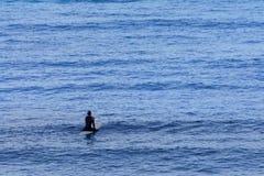 Persona que practica surf solitaria que espera la resaca en el amanecer Fotografía de archivo libre de regalías