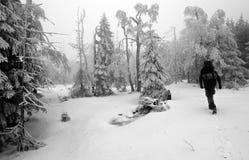 Persona que recorre en bosque oscuro y brumoso en invierno Fotos de archivo libres de regalías