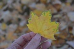 Persona que sostiene la hoja del otoño Fotografía de archivo