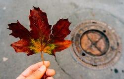 Persona que sostiene la hoja del otoño Fotografía de archivo libre de regalías
