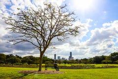 Persona sul banco sotto l'albero in parco fotografia stock libera da diritti