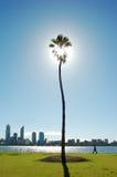 Persona sulla camminata fra la palma e il cityline del fiume Fotografia Stock Libera da Diritti