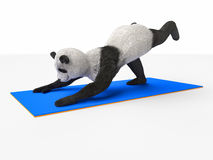 Personage character animal bear panda yoga stretching exercises different postures. Part of collection series of illustrations with panda mammal, which performs stock images