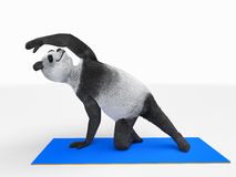 Personage character animal bear panda yoga stretching exercises different postures. Panda who lives healthy life exercise, yoga, stretching and strengthening Stock Photography
