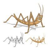 Personaje de dibujos animados detallado del insecto de palillo con diseño y línea plana Art Black y versión blanca Imagen de archivo libre de regalías