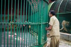 Personal av den stora tigern för zoomatning, Indien Royaltyfri Foto