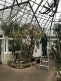 Personal an den botanischen Gärten NYC Bronx interessiert sich für tropische Anlagen stockfotografie