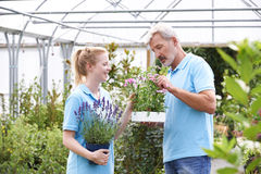 Personal en el centro de jardinería que sostiene las plantas Foto de archivo libre de regalías