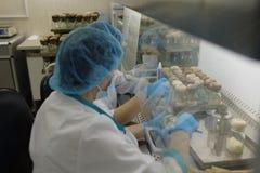 Personal i laboratoriumet av odling av ginsengbiomassa i företaget Vita Fotografering för Bildbyråer
