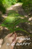Personal point of view of woman`s hand holding fern leaf pointing the way ahead stock photography