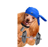 Personal trainer dog with dumbbells and a whistle Royalty Free Stock Photos