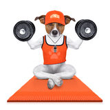 Personal trainer dog Royalty Free Stock Photography