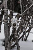 Personale con un cranio delle capre che pende contro una barriera, Altai, Russia degli sciamani fotografia stock libera da diritti