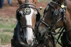 Personas de caballos Fotografía de archivo