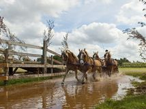 Personas de cuatro caballos Imagenes de archivo